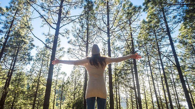 Egal, ob der Pilzkorb voll wird: Ein paar Stunden im Wald helfen Körper und Seele .