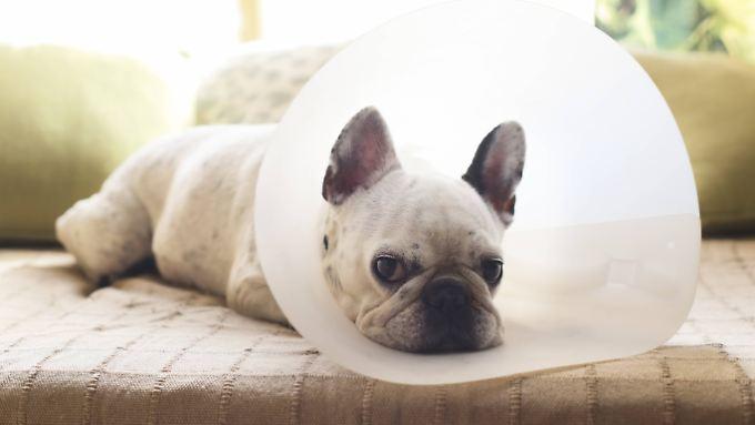Wenn Hund oder Katze krank sind, leiden Frauchen und Herrchen mit.