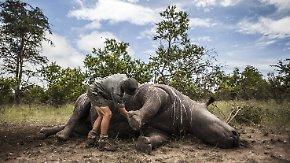 Krieg in Afrikas Naturschutzgebieten: Nordkorea verdient Millionen mit Nashorn-Wilderei
