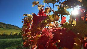 Windig und kühler im Norden: Sonne gibt nochmal Vollgas