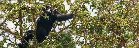 Queen-Elizabeth-Nationalpark: Uganda zeigt Safariurlaubern Artenreichtum