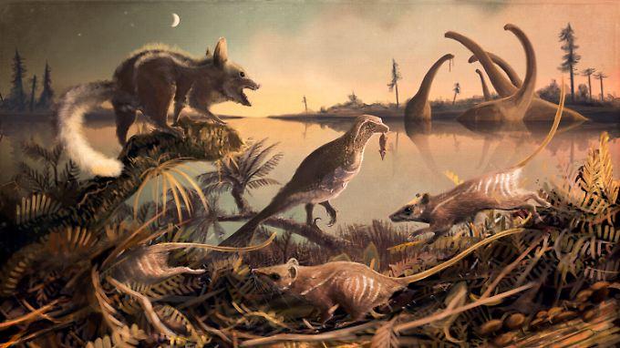So wie die rattenähnlichen Tiere auf dieser Illustration könnten die Ur-Säuger ausgesehen haben.