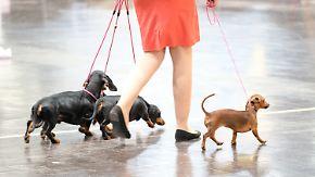 Strammstehen, schwimmen, tanzen: Leipzig sucht den besten Hund der Welt