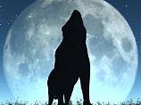 Frage & Antwort, Nr. 507: Heulen Wölfe wirklich den Mond an?