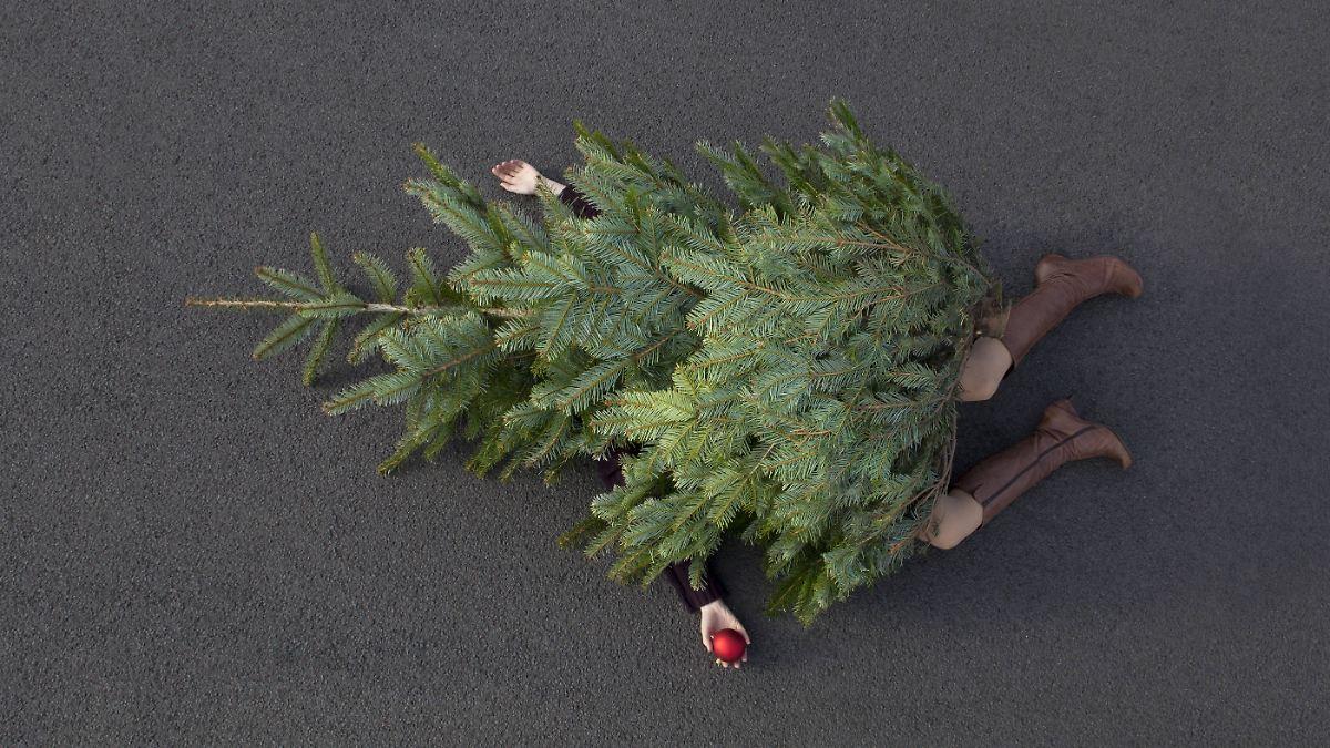 Rentiere und zimtduft weihnachtsdeko in der wohnung hat - Weihnachtsdeko wohnung ...