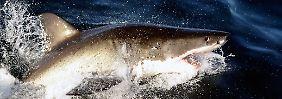 """""""Genau ins Gesicht geschlagen"""": Brite wehrt Hai mit Fausthieb ab"""