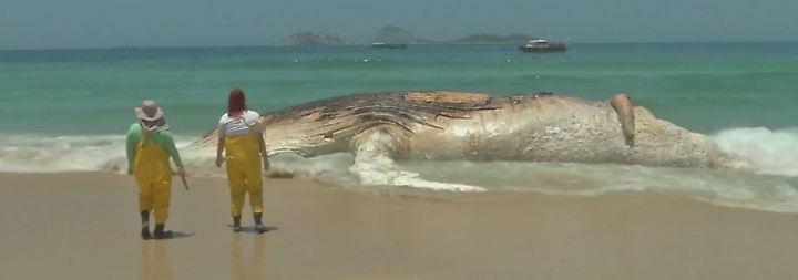 30 Tonnen schwer, 15 Meter lang: Verwesender Wal wird an Rios Strand angespült