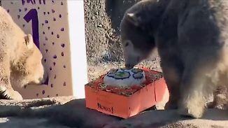 Mit Kuchen und Ständchen: Eisbärzwillinge feiern Geburtstag