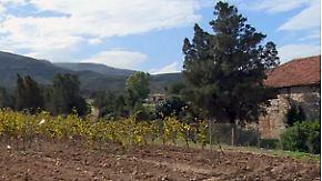 Edler Tropfen aus Afrika: Weinanbau hat in Tunesien eine lange Tradition