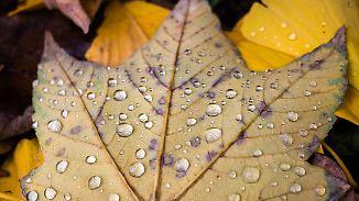 Schmuddelwetter am Samstag: Über Nacht kehrt der Frühwinter zurück