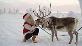 Ausdauerläufer und Kälteprofis: Rentiere: Da staunt der Weihnachtsmann