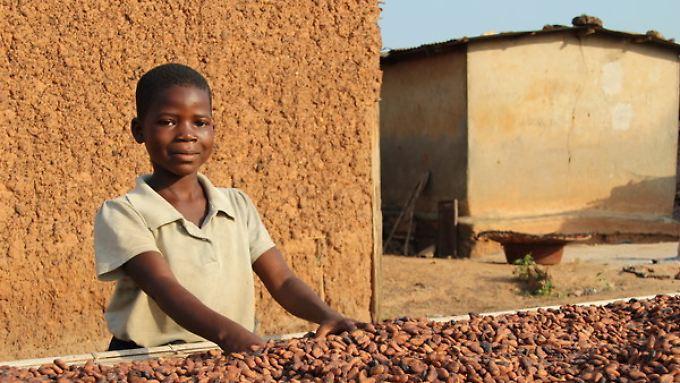 Die neunjährige Moahe hilft  dabei, vor Kurzem geerntete Kakaobohnen in der Sonne zu trocknen.