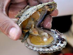 Die Perlenfischerei hat eine lange Tradition in Bahrain. Wenn Touristen eine finden, dürfen sie diese behalten.