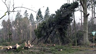 """""""Da hält die stärkste Eiche nicht"""": Orkan lässt Wälder verwüstet zurück"""