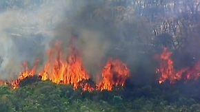 Hitzewelle in Australien: Waldbrände fressen sich durch ausgetrocknete Landschaften
