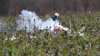 Vier Tote nach Luft-Kollision bei Karlsruhe: Kleinflugzeug kracht in Hubschrauber