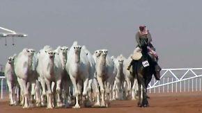 Botox für Kamele: Saudi-Arabien sucht das schönste Trampeltier