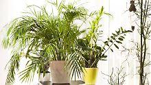 Sehen gut aus und schaffen eine angenehme Atmosphäre. Aber sind Pflanzen auch im Schlafzimmer unproblematisch?