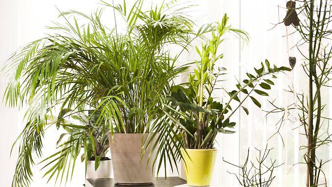 frage antwort nr 519 sind pflanzen im schlafzimmer sch dlich n. Black Bedroom Furniture Sets. Home Design Ideas