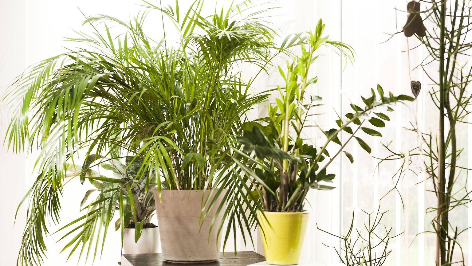 Frage & Antwort: Sind Pflanzen im Schlafzimmer schädlich? - n-tv.de
