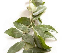 Als Curry-Strauch ist Curry sogar ein eigenständiges Gewürz. Die Blätter und Zweige verstärken die exotische Note von Currys.
