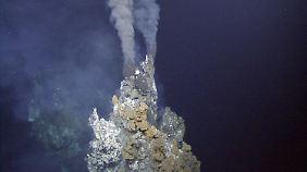 Ein sogenannter aktiver Raucher. Die Tiere nutzen diese vulkanische Quelle als Heizung für ihre Kapseln.