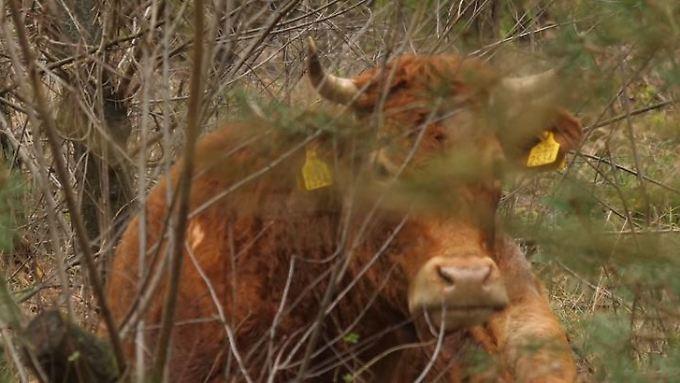 Lebt seit über sechs Wochen im Wald: Hermien.