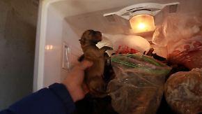 Miserable Haltung und grausamer Tod: Südkoreaner beharren auf Hundefleisch-Verzehr