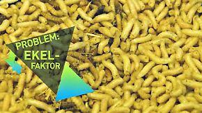 Startup News, die komplette 74. Folge: Gründer bringen Insekten auf europäische Teller