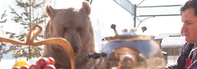 300-Kilo-Koloss als Haustier: Braunbär Stepan lebt seit 25 Jahren bei russischem Ehepaar