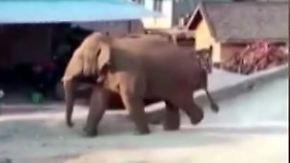 Dickhäuter im Wohnzimmer: Elefantenherde fällt über chinesische Stadt her