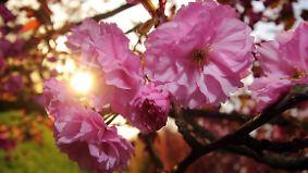 Sommer im April: Freitag läutet Sonnenwochenende ein