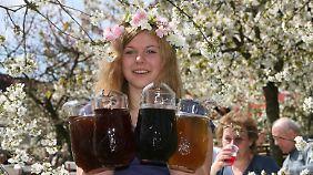 Beim Baumblütenfest in Werder dreht sich alles um den Obstwein.