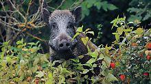 Bundesfinanzhof prüft: Wildtierschäden bei der Steuer absetzen?