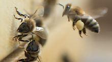 Insektenfreundliche Produkte: Gegen das Bienensterben einkaufen