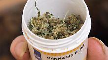 Mediziner dämpfen Hoffnungen: Bedenken gegen Cannabis als Arznei