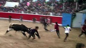 Kaum zu glauben, aber wahr: Stiere verletzen viele Peruaner bei Festival