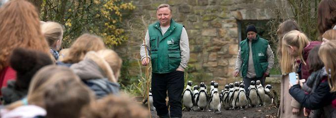 Ermittelt undercover im Zoo: Kommissar Thie (Axel Prahl)