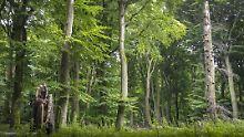 Forscher erstellen Landkarte: Das sind Europas letzte Urwälder