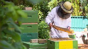 n-tv Ratgeber: Bienen als Hobby: Imkern in der Großstadt