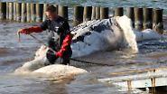 Aufregung im Seeheilbad: Toter Buckelwal taucht an Ostseeküste auf