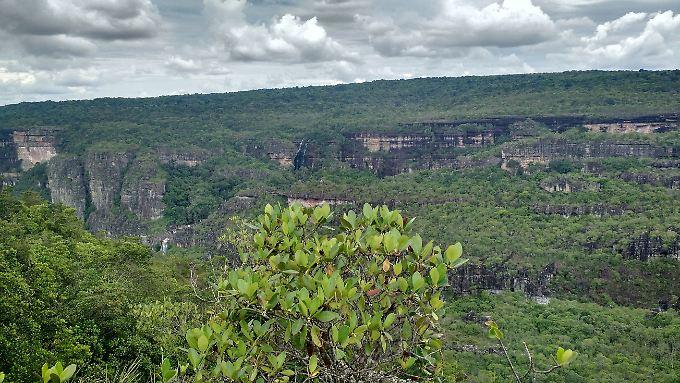 Der Nationalpark Serranía de Chiribiquete ist größer als die Niederlande.