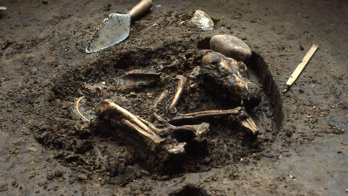 Hundegrab von der Koster-Fundstätte in Illinois, etwa 10.000 Jahre alt.