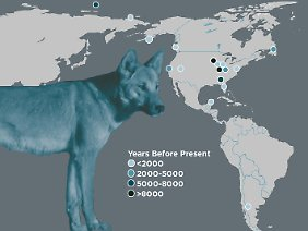 Die Punkte stehen für die Orte, von denen die Knochen von alten Hunden für die Analyse gesammelt wurden.