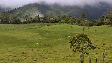 Amazoniens Bevölkerungsrückgang: Nebelwälder verbergen grausame Geschichte