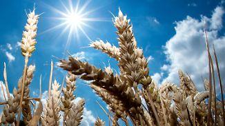 Donnerstag heiß, Freitag heißer: Gewitterrisiko steigt Richtung Wochenende