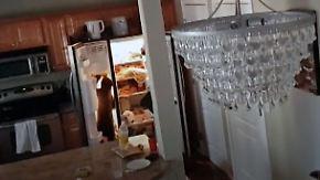 Drei freche, tollpatschige Einbrecher: Bärenkinder räumen Kühlschrank aus