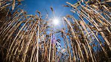 Einbruch der Erntebilanz: Die Forderung nach Dürrehilfen ist dreist