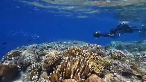 Künstliche Intelligenz im Meer: Hightech soll sterbende Korallen retten