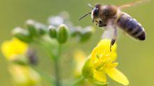 """""""Es geht ums Überleben"""": Biopestizide - die Revolution auf dem Acker?"""